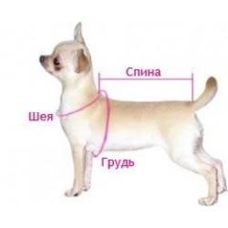 Як виміряти собаку і її лапку